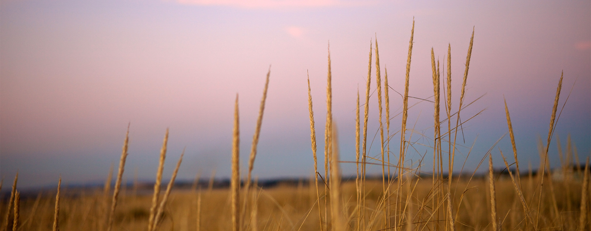 banner-cannonbeachphoto-Serene-Sand-Dune,-Yellow-Dune-Grass-original